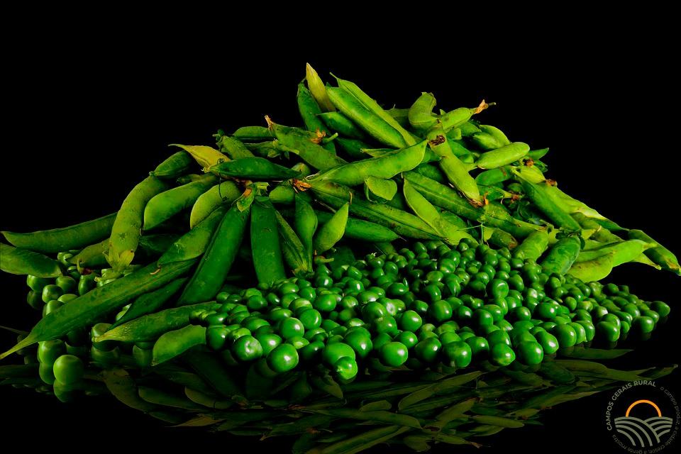 Informações genéticas da ervilha trazem perspectivas para a alimentação no planeta.