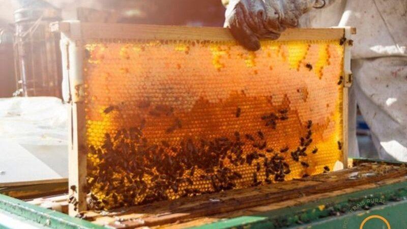 Região Sul é responsável por 45% do mel produzido no Brasil