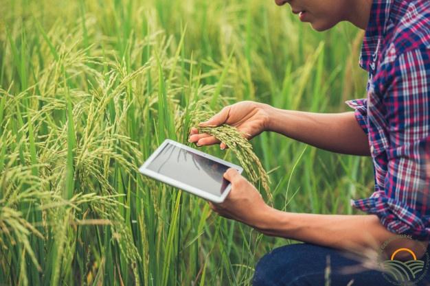 A agronomia ajuda a proteger o meio ambiente?