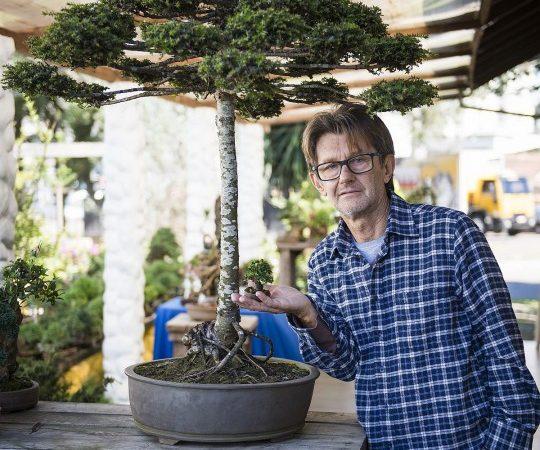 Único bonsai de Araucária do mundo é de Curitiba